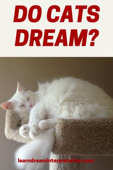 Do Cats Dream