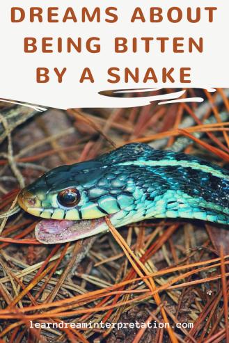 Dream Meaning of Snake Bites